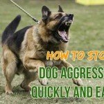 stop dog aggression quickly easily