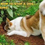 Stop your dog from digging holes in the yard